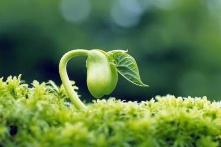 Tinh chất mầm đậu nành có ngừa được mãn kinh sớm?