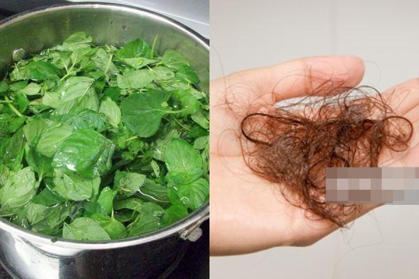 Tóc hết rụng 100% với công thức gội đầu không hóa chất từ rau húng quế