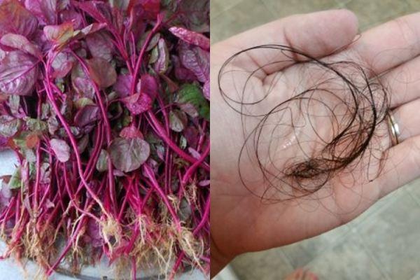 Tóc rụng mãi không ngừng: hãy dùng nước rau dền đỏ - Ảnh 1