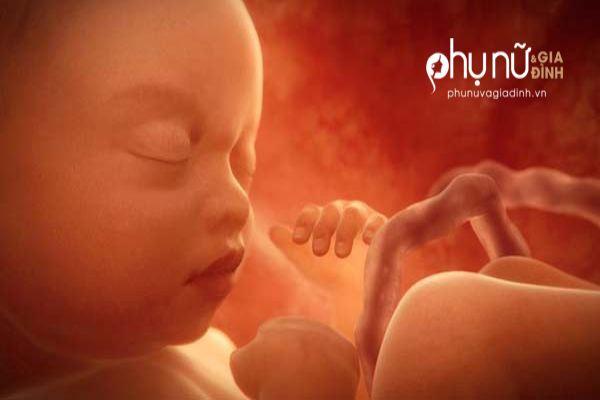 Thai nhi 28 tuần tuổi: Xin mẹ đừng khóc nữa, con sợ bị