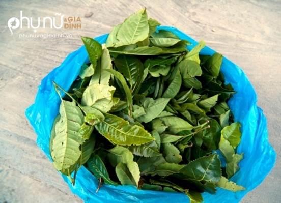 Vò 2 loại lá này nấu nước rửa, vùng kín se khít hồng hào và không còn viêm nhiễm  - Ảnh 2