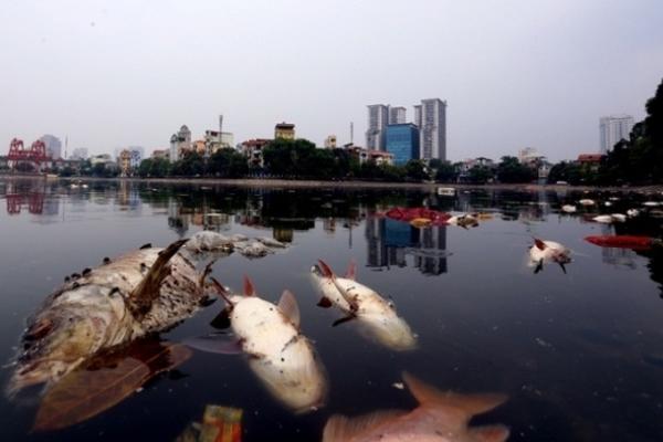 Đi tìm nguồn gốc cá bán ở các chợ Hà Nội