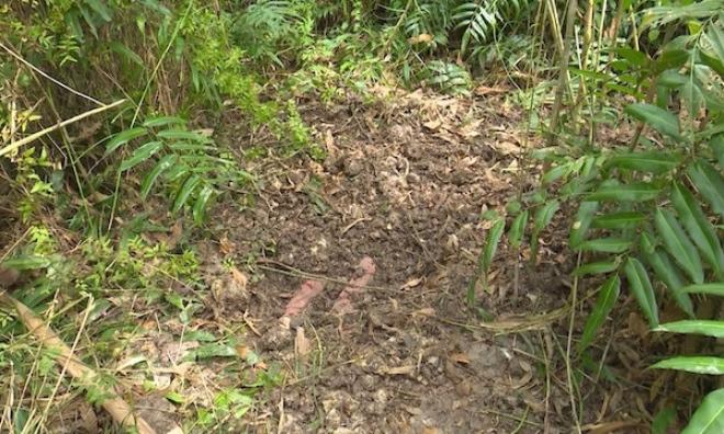Bé gái 13 tuổi bị sát hại, thi thể được chôn dưới bụi cây gần nhà