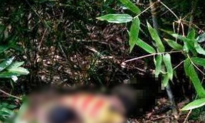 Phát hiện thi thể nam thanh niên nằm sấp trong bụi cây, nghi ăn lá ngón tự tử