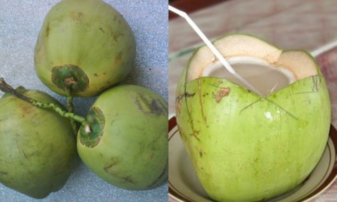 Trái dừa 10 ngàn - nguyên liệu làm đẹp da dễ kiếm không tưởng!