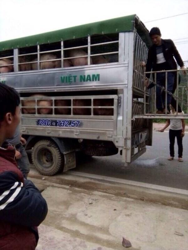 Hà Giang: Chủ trang trại cho côn đồ chặn xe cướp lợn đã bán, ép tài xế ký giấy nợ hơn 3 tỷ đồng? - Ảnh 1