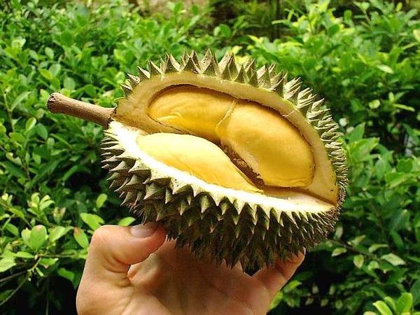 Ăn sầu riêng có mập không và những lưu ý đặc biệt khi ăn sầu riêng