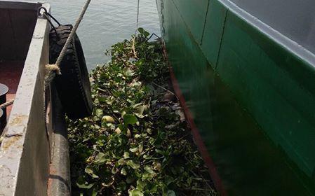 Phát hiện thi thể người phụ nữ đang phân huỷ trên sông Sài Gòn - Ảnh 1