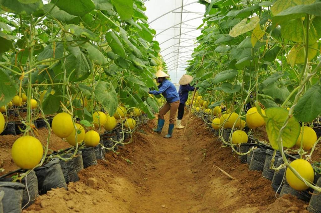 Ngày càng nhiều 'đại gia' bất động sản bắt tay vào làm nông nghiệp - Ảnh 1