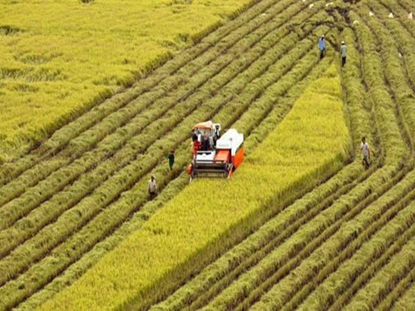 Ngày càng nhiều 'đại gia' bất động sản bắt tay vào làm nông nghiệp - Ảnh 3