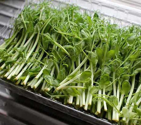 Đừng vội vứt những thực phẩm mọc mầm này đi vì chúng đều là 'thần dược' đối với sức khỏe - Ảnh 2