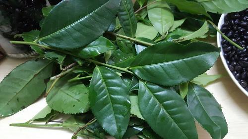 Không cần tắm trắng, da dẻ vẫn nâng tông đều đặn nhờ đắp mặt nạ bằng bột trà xanh - Ảnh 1