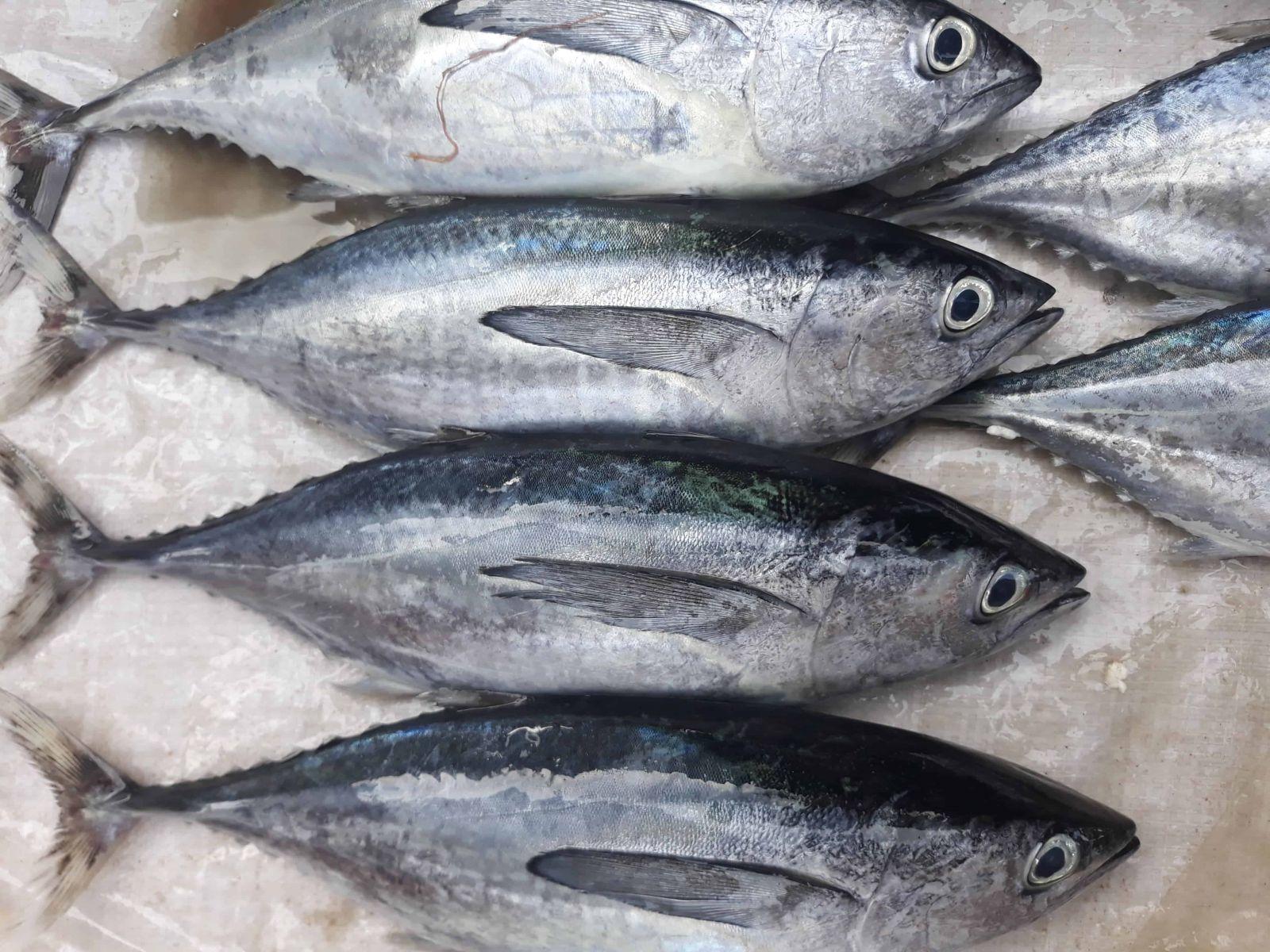 Kiêng ăn gì trước khi mang thai: Các loài cá có hàm lượng thủy ngân cao