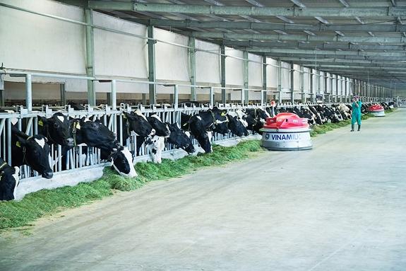 Vùng nguyên liệu bò sữa giúp Vinamilk dẫn đầu thị trường sữa tươi - Ảnh 2