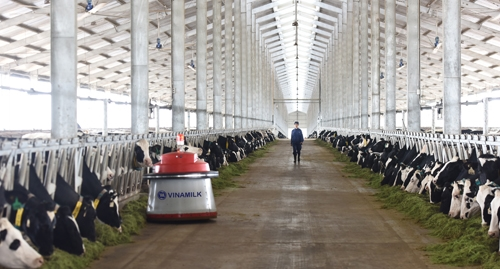 Vùng nguyên liệu bò sữa giúp Vinamilk dẫn đầu thị trường sữa tươi - Ảnh 4