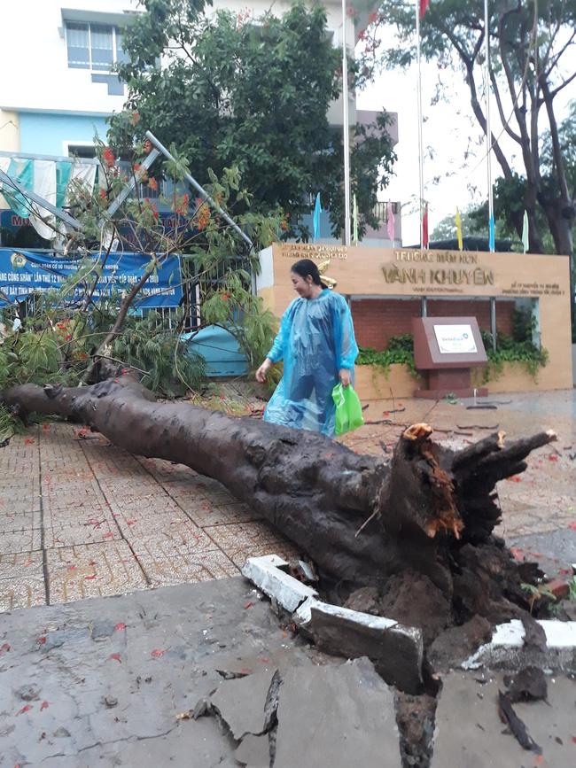 Mưa kèm gió mạnh, cây phượng lớn lại bật gốc đè xuống cổng trường mầm non ở TP.HCM khiến nhiều người hoảng hồn - Ảnh 3