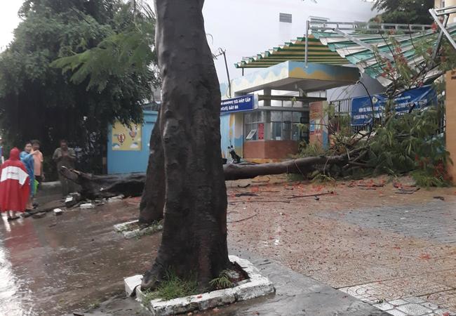 Mưa kèm gió mạnh, cây phượng lớn lại bật gốc đè xuống cổng trường mầm non ở TP.HCM khiến nhiều người hoảng hồn - Ảnh 4