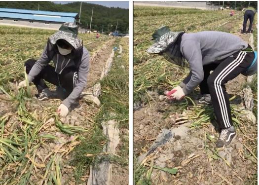 """Thanh niên làm nông tiết lộ cách kiếm 2-3 triệu/ngày ở bên Hàn và thứ """"đạo cụ"""" đắc lực không thể thiếu này khiến dân mạng siêu bất ngờ - Ảnh 3"""