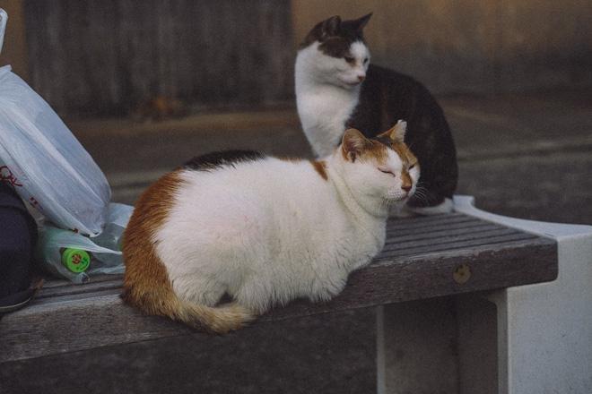 Tìm ra thủ phạm đứng đằng sau cái chết của hàng chục con mèo trên đảo Nhật Bản, lời khai khiến nhiều người cảm thấy bất bình - Ảnh 2