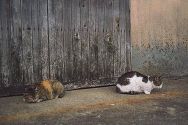 Tìm ra thủ phạm đứng đằng sau cái chết của hàng chục con mèo trên đảo Nhật Bản, lời khai khiến nhiều người cảm thấy bất bình - Ảnh 3