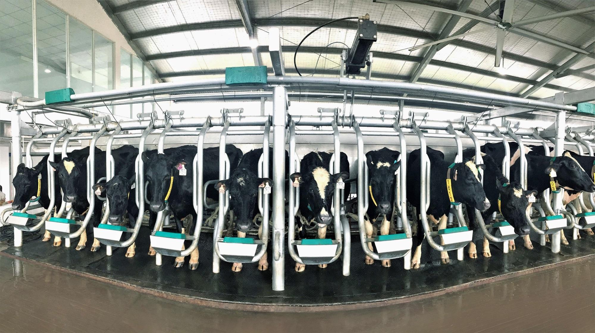 Vinamilk tiên phong sản xuất sữa A2 tại Việt Nam - Ảnh 4