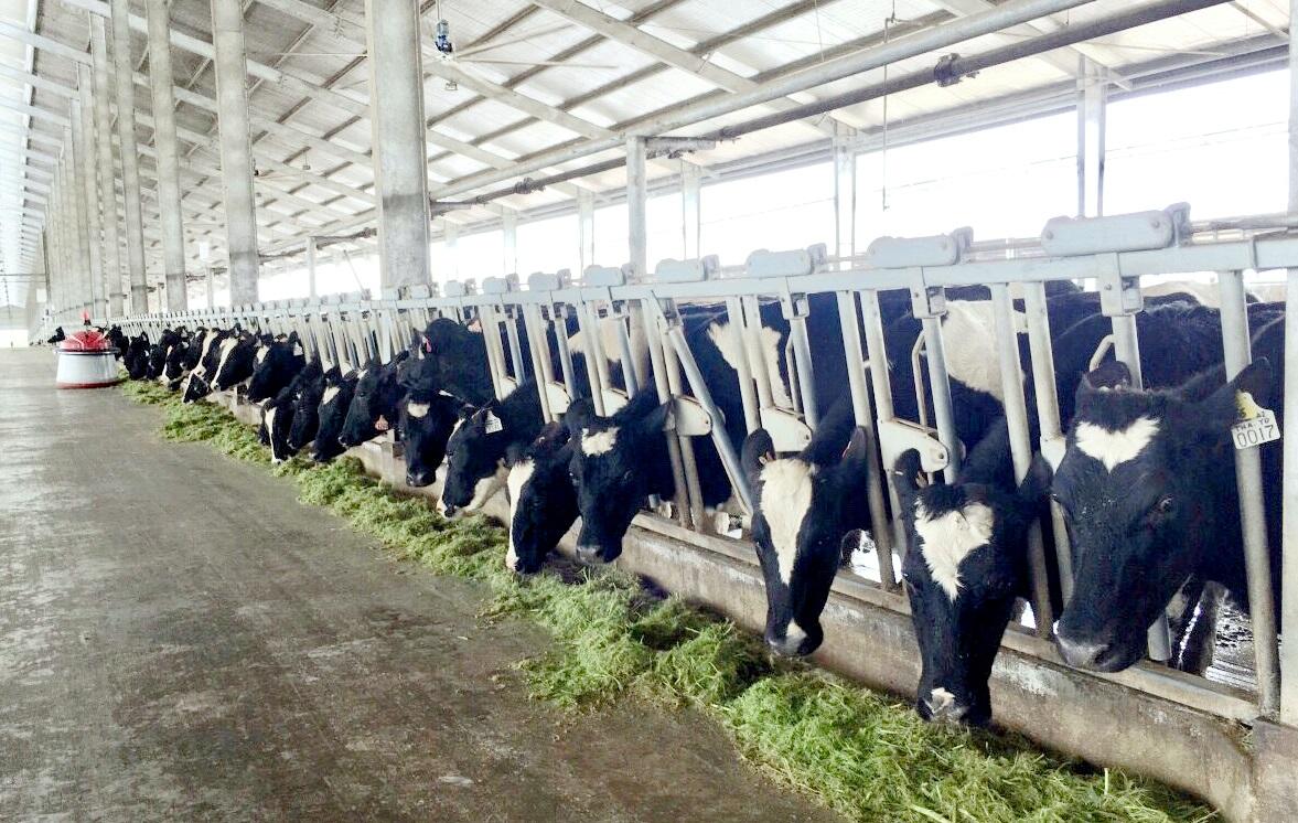 Vinamilk tiên phong sản xuất sữa A2 tại Việt Nam - Ảnh 5