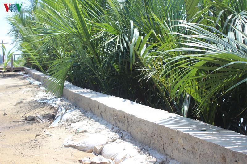 Nhiều dự án lấn chiếm rừng dừa Bảy Mẫu - Ảnh 2
