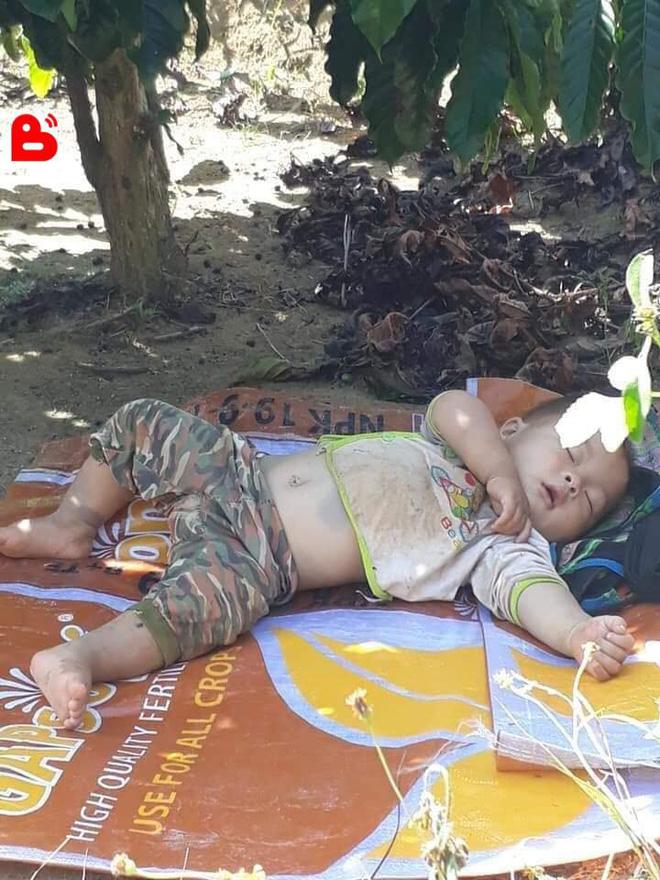 Hình ảnh cậu bé bụ bẫm nằm ngủ dưới gốc cây cà phê khi theo bố mẹ lên rẫy 'đốn tim' cộng đồng mạng vì quá sức dễ thương - Ảnh 2
