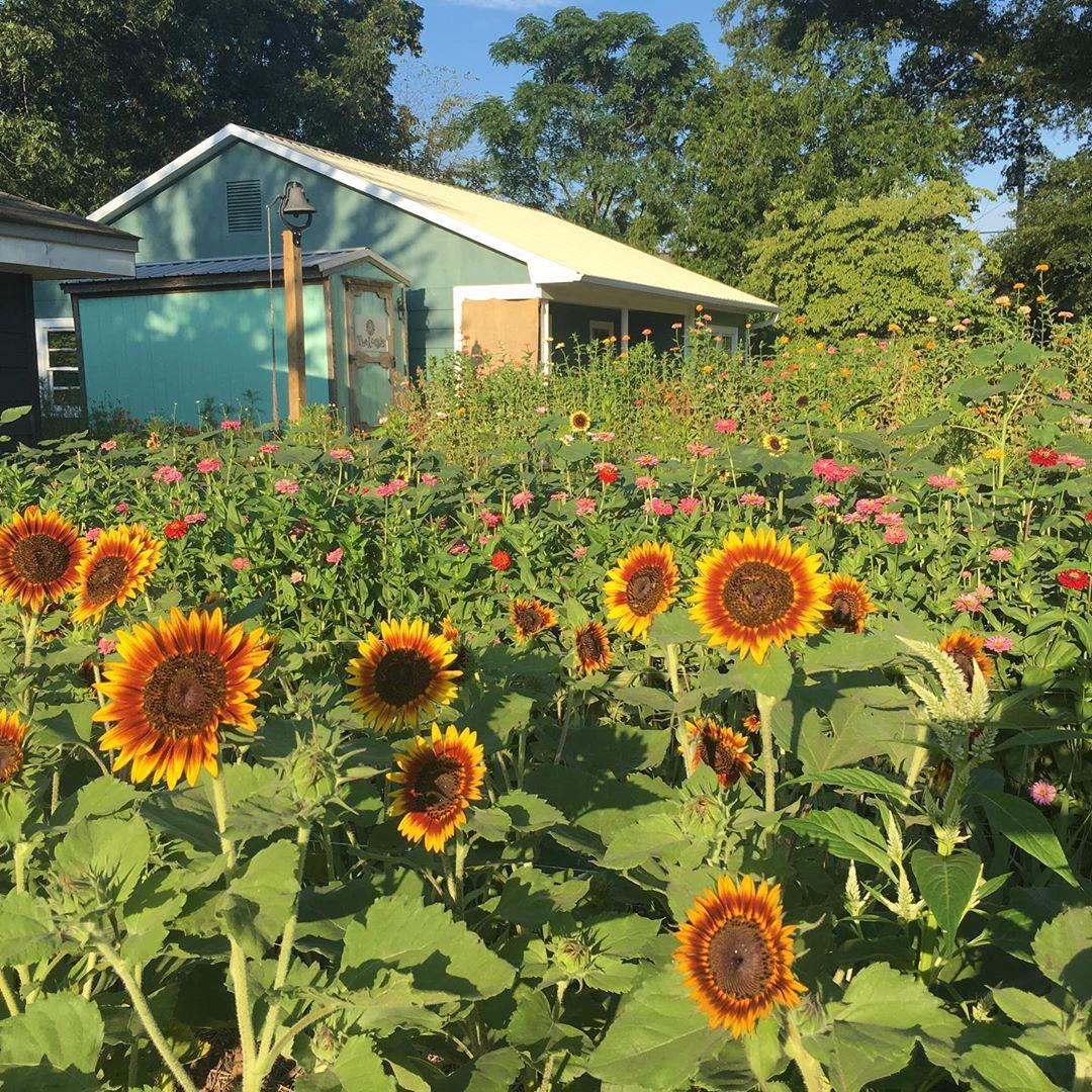Cô gái trẻ trồng cả vườn rau và hoa theo phương pháp hữu cơ vì yêu thích sống trong không gian xanh - Ảnh 1