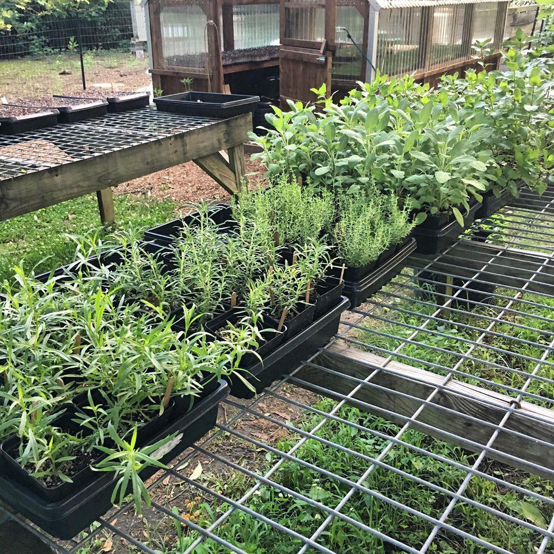 Cô gái trẻ trồng cả vườn rau và hoa theo phương pháp hữu cơ vì yêu thích sống trong không gian xanh - Ảnh 4