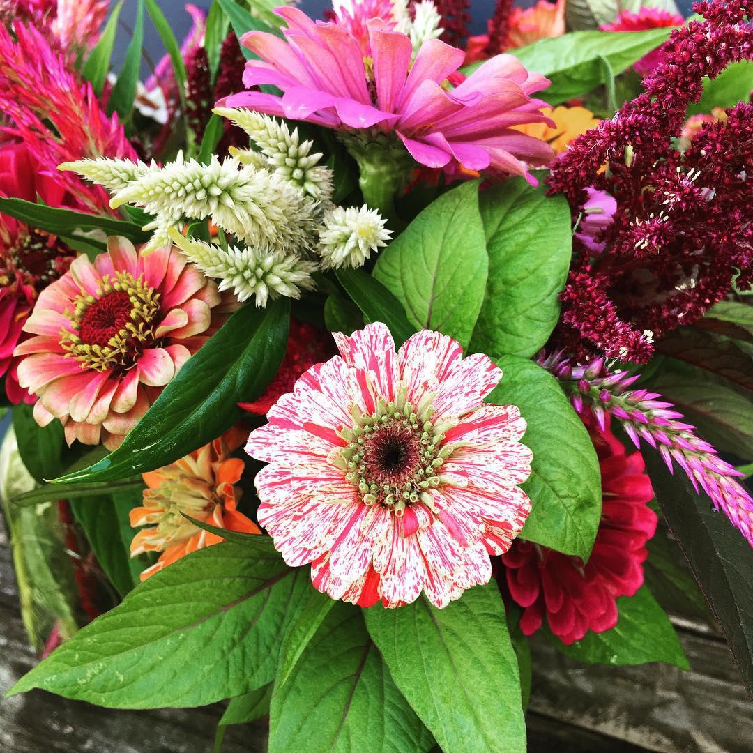 Cô gái trẻ trồng cả vườn rau và hoa theo phương pháp hữu cơ vì yêu thích sống trong không gian xanh - Ảnh 9