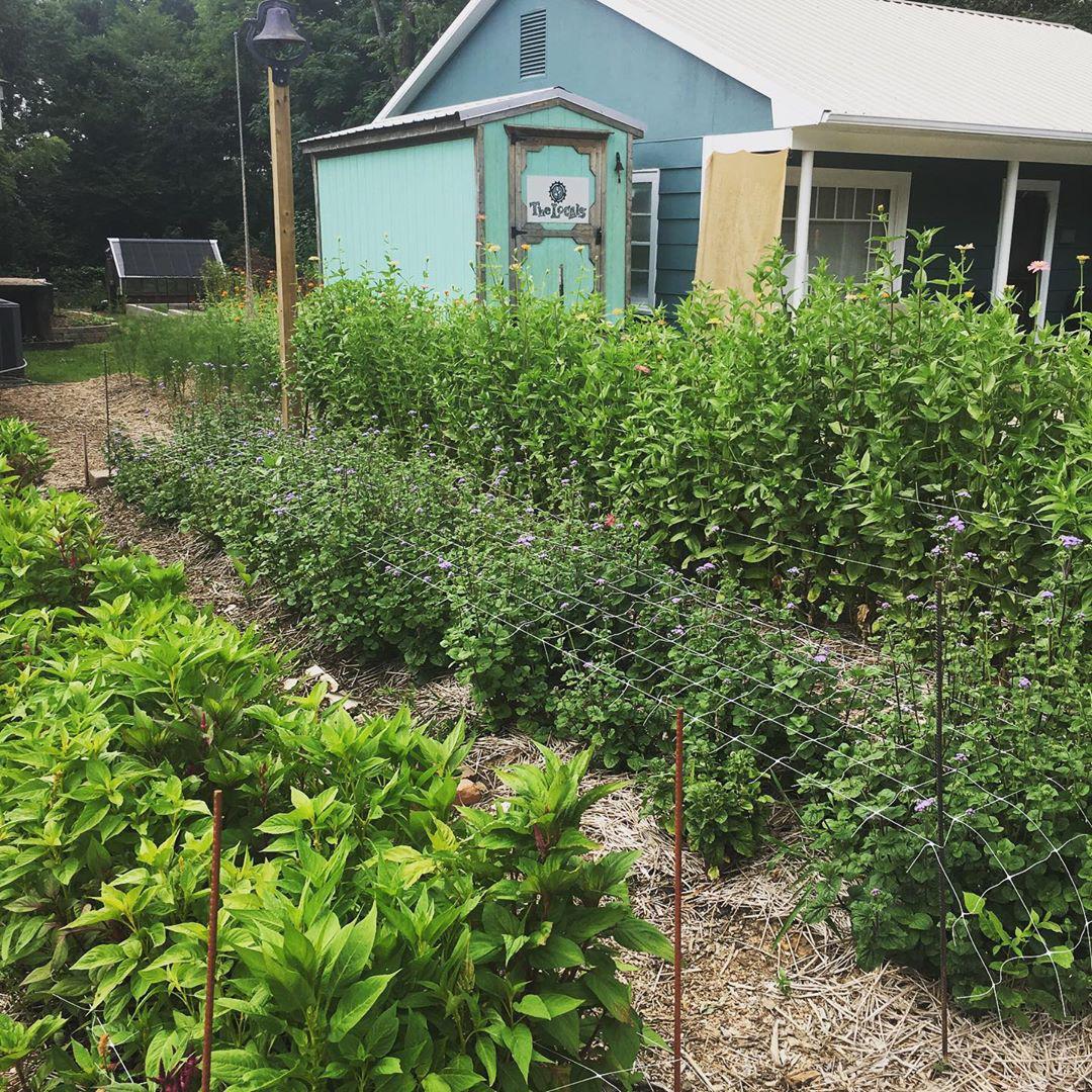 Cô gái trẻ trồng cả vườn rau và hoa theo phương pháp hữu cơ vì yêu thích sống trong không gian xanh - Ảnh 10