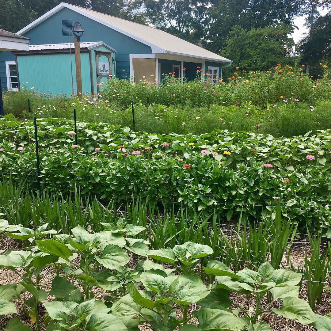 Cô gái trẻ trồng cả vườn rau và hoa theo phương pháp hữu cơ vì yêu thích sống trong không gian xanh - Ảnh 13