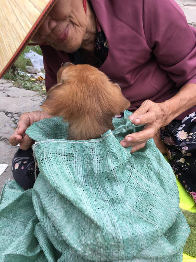 Cụ già hôn tạm biệt chú chó nhỏ trên vỉa hè cùng câu chuyện đau lòng khiến người đọc không cầm được nước mắt - Ảnh 3