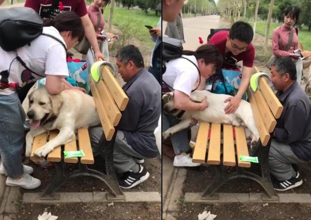Cảnh khuyển về hưu mắc kẹt vào ghế ở công viên vì quá... thừa cân khiến cư dân mạng vừa buồn cười vừa thương - Ảnh 1