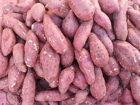 Cơ thể sẽ thế nào nếu thường xuyên ăn khoai lang? - Ảnh 1