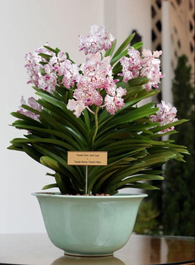 8 loài hoa được lấy cảm hứng từ các thành viên của gia đình Hoàng gia Anh bạn có thể trồng trong vườn nhà mình - Ảnh 6
