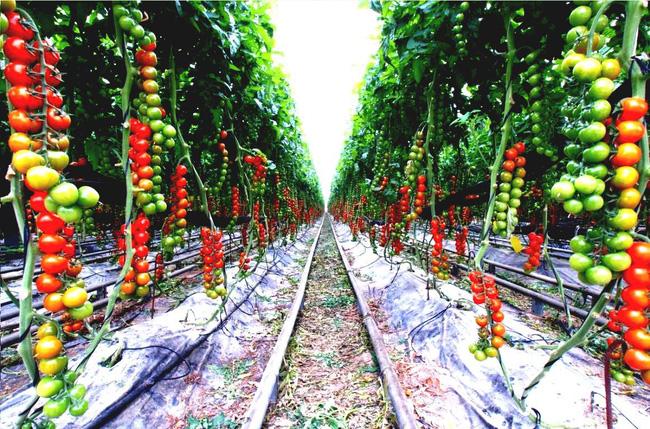 8 mẹo giúp khu vườn của bạn tươi tốt trong mùa xuân để đón chào những đợt thu hoạch mới - Ảnh 1