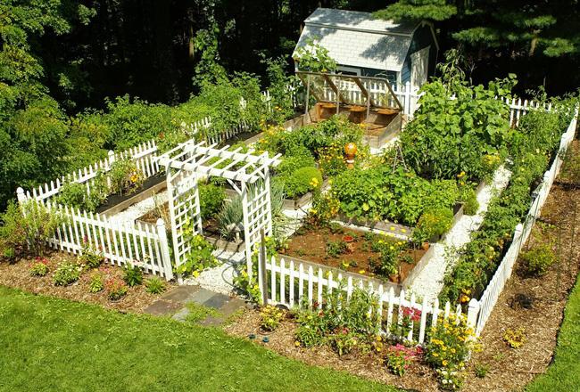 8 mẹo giúp khu vườn của bạn tươi tốt trong mùa xuân để đón chào những đợt thu hoạch mới - Ảnh 2
