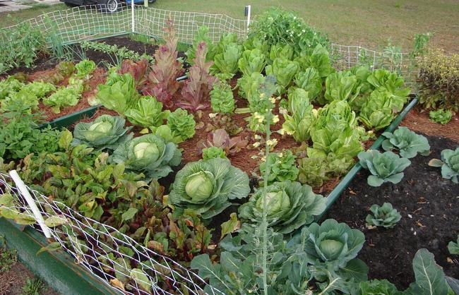 8 mẹo giúp khu vườn của bạn tươi tốt trong mùa xuân để đón chào những đợt thu hoạch mới - Ảnh 3