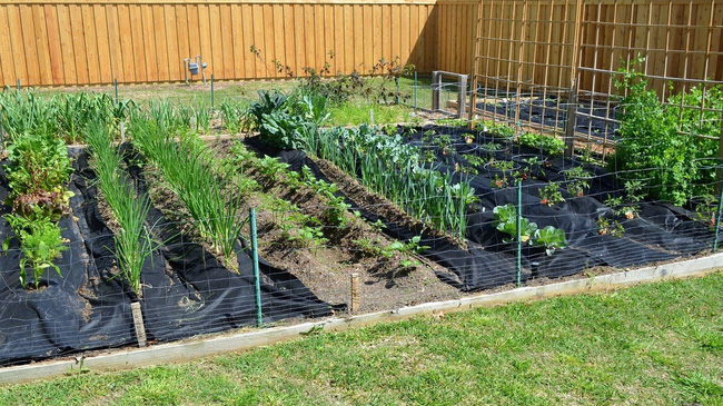 8 mẹo giúp khu vườn của bạn tươi tốt trong mùa xuân để đón chào những đợt thu hoạch mới - Ảnh 4