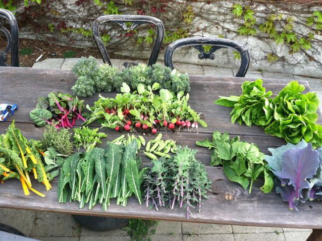 8 mẹo giúp khu vườn của bạn tươi tốt trong mùa xuân để đón chào những đợt thu hoạch mới - Ảnh 5