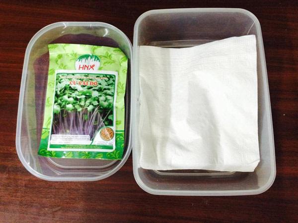 Cách trồng rau mầm bằng giấy ăn cực đơn giản tại nhà, thu hoạch mỏi tay không hết - Ảnh 2