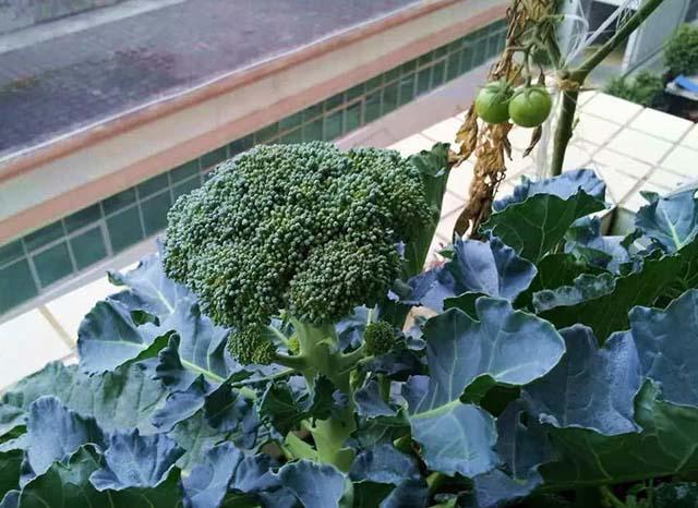 4 loại rau là thần dược chống ung thư, người Việt chớ coi thường - Ảnh 3