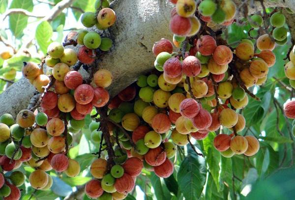Mẹ bầu thường xuyên ăn loại quả này, thai nhi khỏe mạnh, mẹ lúc nào cũng tươi cười hạnh phúc - Ảnh 1