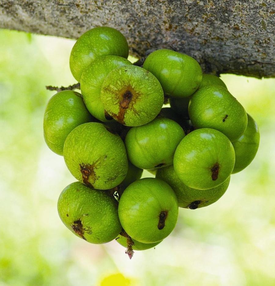 Mẹ bầu thường xuyên ăn loại quả này, thai nhi khỏe mạnh, mẹ lúc nào cũng tươi cười hạnh phúc - Ảnh 4