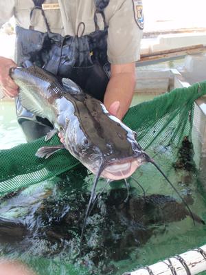 """6 loại cá """"quen nhẵn mặt"""" nhưng chứa hàm lượng thủy ngân cao, chuyên gia khuyên không ăn nhiều - Ảnh 2"""