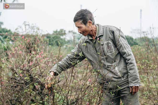 Gần 200 gốc đào của người dân Bắc Ninh bị chặt phá trong đêm: 'Tết năm nay còn chả có bánh chưng mà ăn' - Ảnh 8