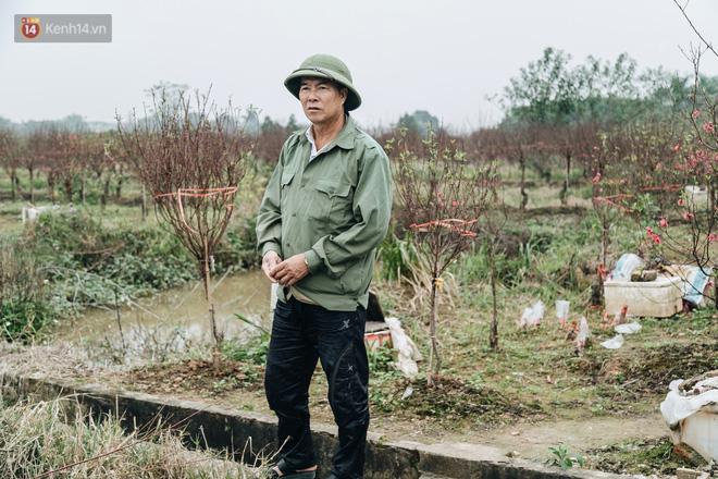 Gần 200 gốc đào của người dân Bắc Ninh bị chặt phá trong đêm: 'Tết năm nay còn chả có bánh chưng mà ăn' - Ảnh 14