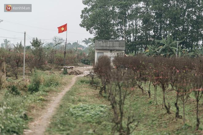 Gần 200 gốc đào của người dân Bắc Ninh bị chặt phá trong đêm: 'Tết năm nay còn chả có bánh chưng mà ăn' - Ảnh 17